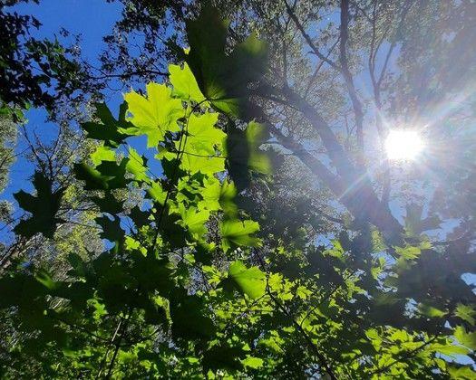 Лето-2021 в Самарской области установило пять пого...