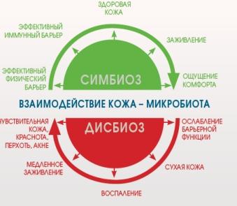 Реальность или миф? Биологическая защита кожи для сохранения ее здоровья и молодости, изображение №2